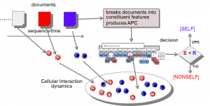 The Agent-Based T-Cell Cross-regulation Model for Document Classification